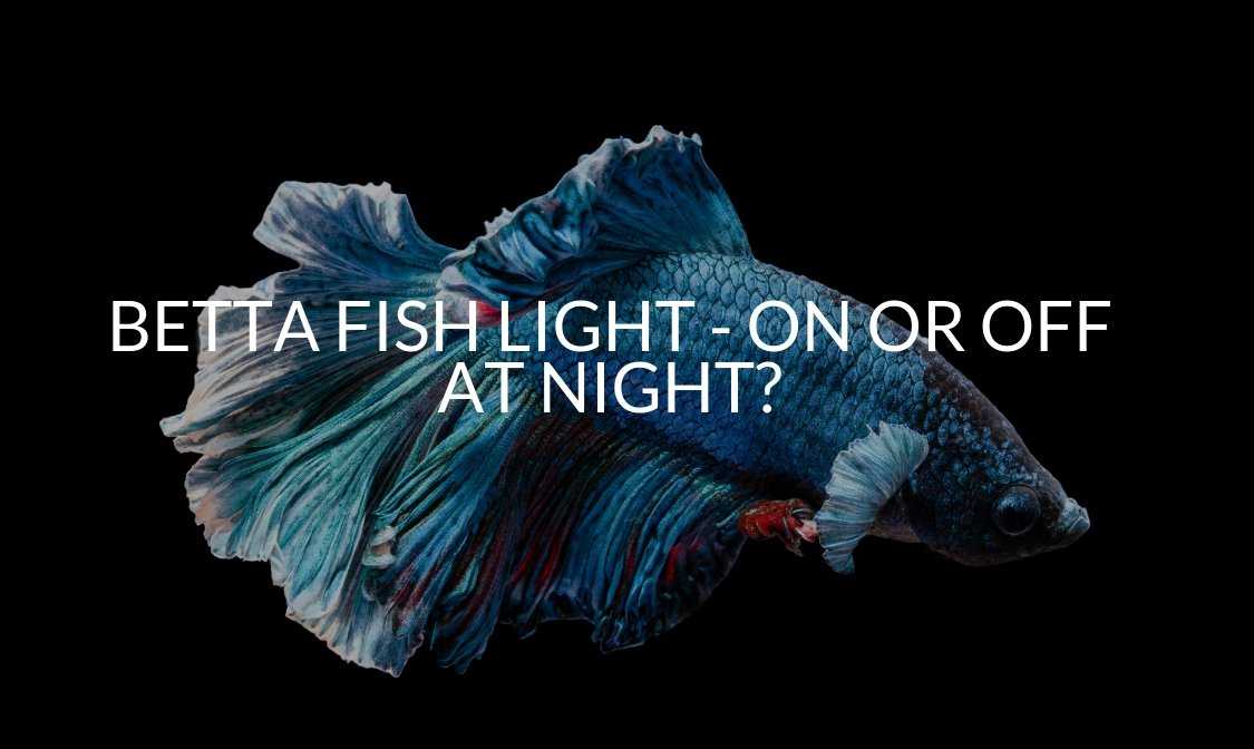 BETTA FISH LIGHT - ON OR OFF AT NIGHT_