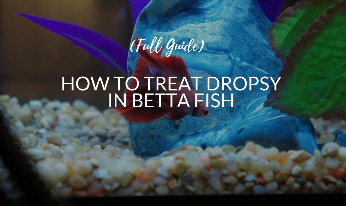 How To Treat Dropsy In Betta Fish