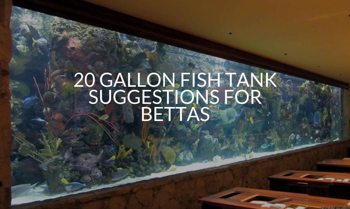 20 Gallon Fish Tank Suggestions For Bettas