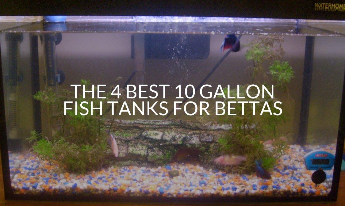 Best 10 Gallon Fish Tanks For Bettas