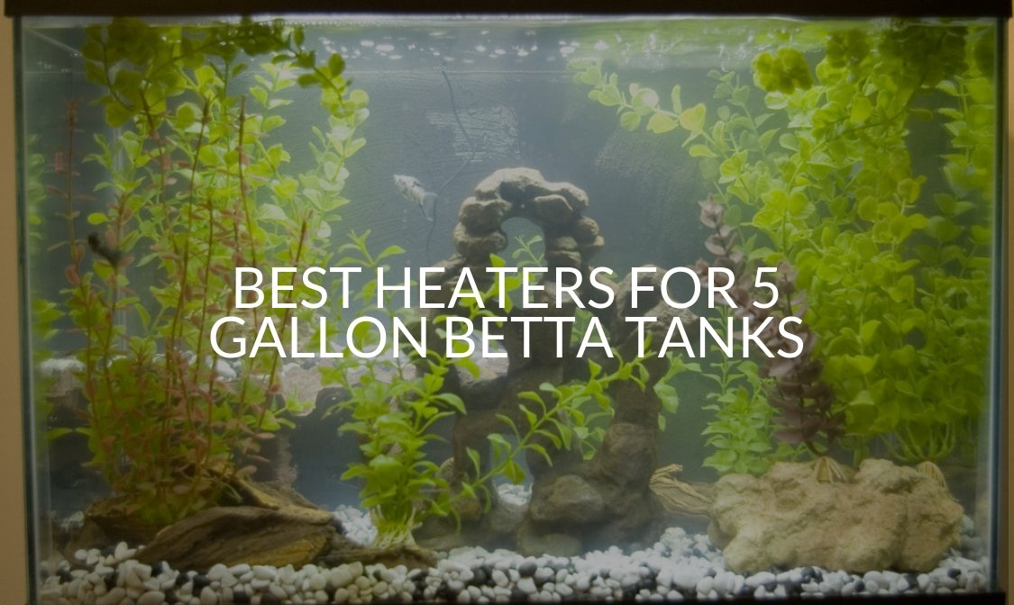Best Heaters For 5 Gallon Betta Tanks