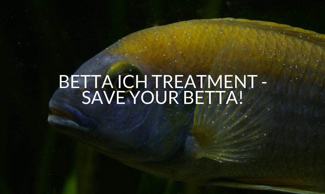 Betta Ich Treatment - Save Your Betta!.jpg