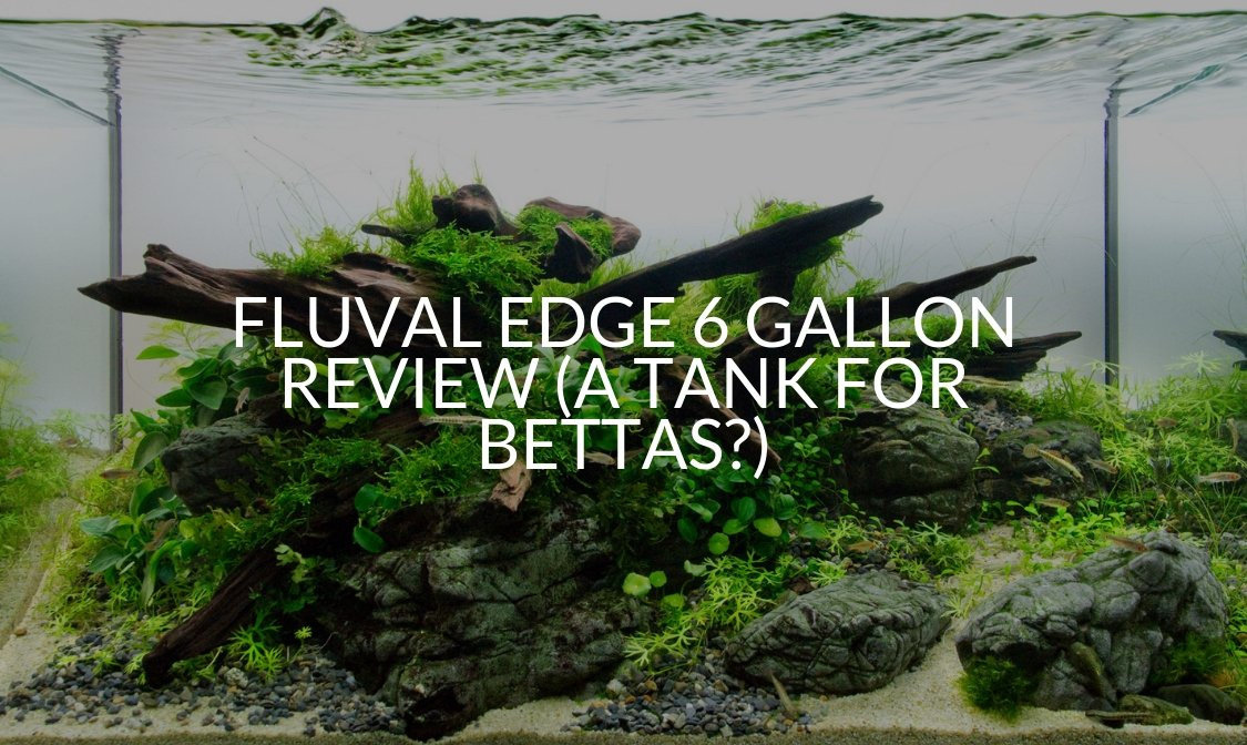 Fluval Edge 6 Gallon Review (A Tank For Bettas?)
