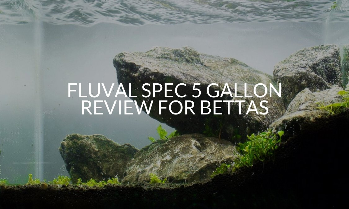 Fluval Spec 5 Gallon Review For Bettas