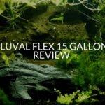 Fluval Flex 15 Gallon Review