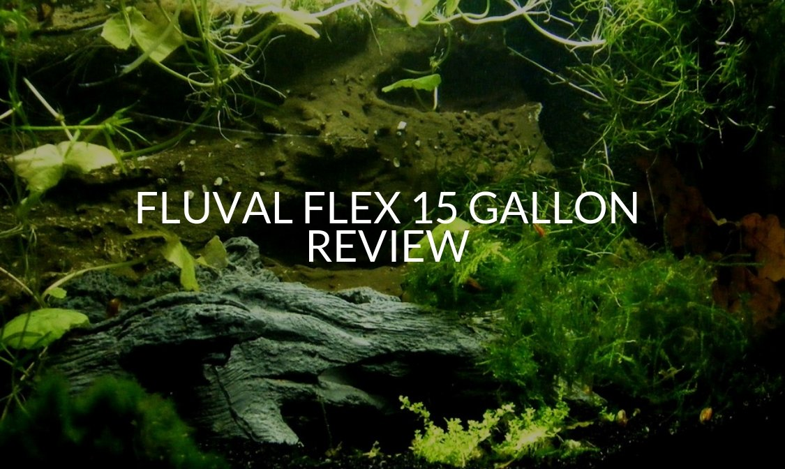 Fluval Flex 15 Gallon Review