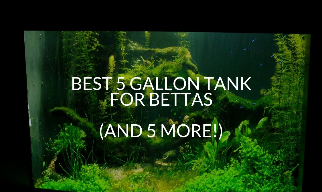 Best 5 Gallon Tank For Bettas (And 5 More!)