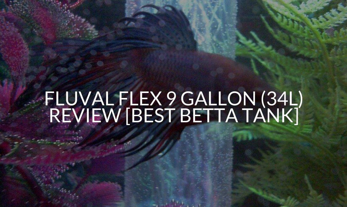 Fluval Flex 9 Gallon (34L) Review [Best Betta Tank]