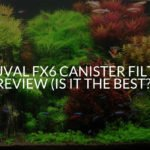 Fluval Fx6 Canister Filter Review (Is It The Best_)