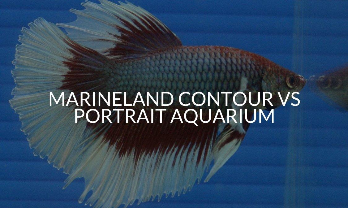 Marineland Contour Vs Portrait Aquarium