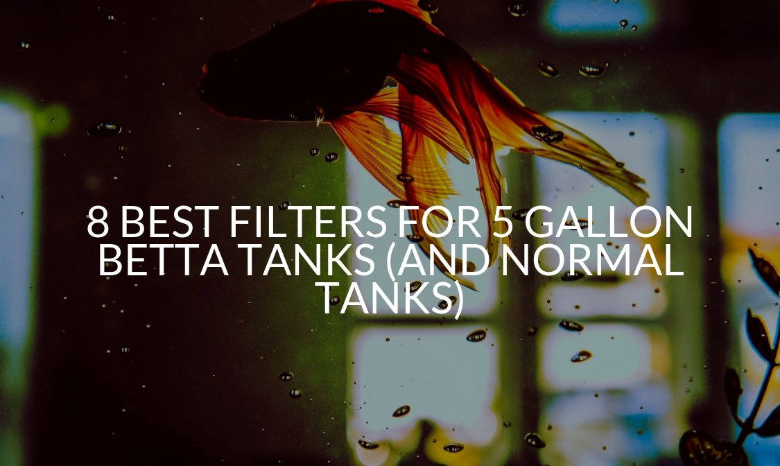 8 Best Filters For 5 Gallon Betta Tanks (And Normal Tanks)