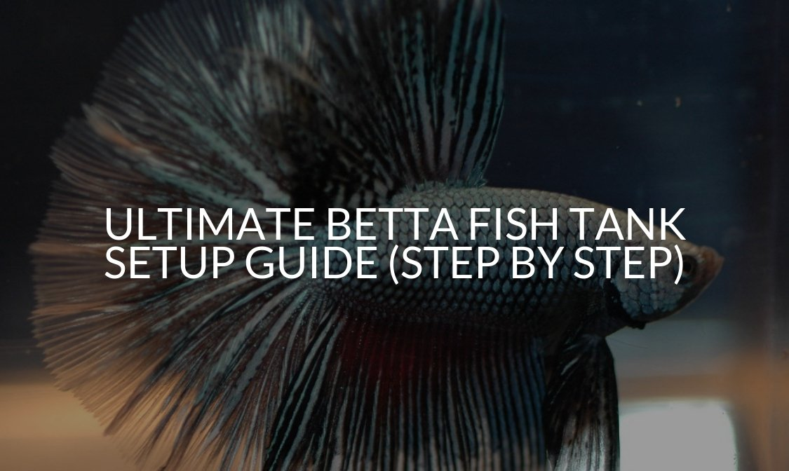 Ultimate Betta Fish Tank Setup Guide (Step By Step)